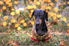 Cute Warm clothes for dogs.  stock photo