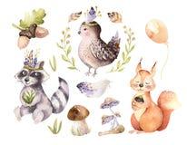 Cute watercolor bohemian baby cartoon hedgehog, squirrel and moose animal for nursary, woodland isolated forest. Cute watercolor bohemian baby cartoon rabbit and Stock Photo