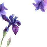 Cute watercolor flower background with purple irises. Invitation. Wedding card. Birthday card stock illustration
