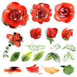 Cute watercolor flowers. Roses. Elements Royalty Free Stock Photos