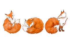 Cute watercolor foxes Royalty Free Stock Photography