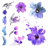 Cute watercolor hand painted flower elements Stock Images