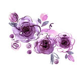 Cute watercolor hand painted purple roses. Royalty Free Stock Photography