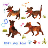Cute watercolor set with dogs and their things. Illustration wit Royalty Free Stock Photography