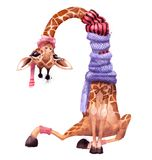 Cute watercolor winter giraffe. With pink hat Royalty Free Stock Photos
