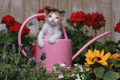 Cute 3 week old Baby Kitten in a Garden Setting Stock Images
