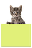 Cute 5 weeks old tabby baby cat holding a yellow post it paper Royalty Free Stock Photo