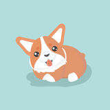 Cute welsh corgi dog. Stock Image