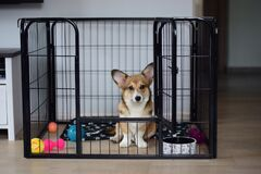 Free Cute Welsh Corgi Pembroke Puppy Dog In A Crate Training Sitting Stock Image - 180856551