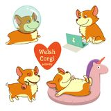 Cute welsh corgi set in different poses. Funny corgi vector illustration. Royalty Free Stock Images