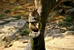 Cute Wet Monkey Hanging out in Tree Stock Photos