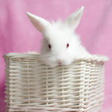 Cute white baby rabbit Stock Photo