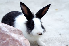Cute white and black bunny on the ground Stock Image