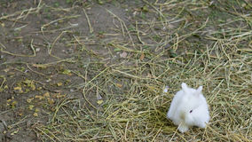 Cute white bunny Stock Photos