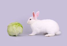 Cute white bunny and lettuce Royalty Free Stock Photo