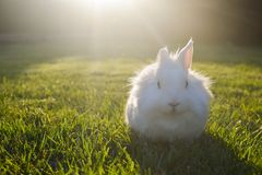 Bunny playing in the grass. Cute white bunny playing in the grass, on a sunny day stock photo