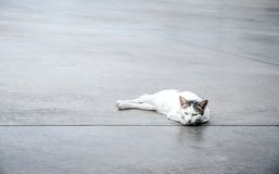 Cute white cat on the floor royalty free stock images