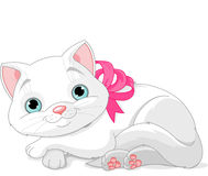 Cute white cat Royalty Free Stock Image