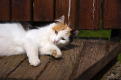 Cute White Cat Laying Down on A Bench Stock Images
