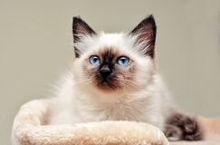 Cute white cat looking in a scratcher Stock Images