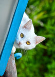 Cute white cat on nature Royalty Free Stock Image