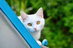 Cute white cat on nature Stock Image