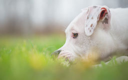Cute white dog in grass Stock Photo