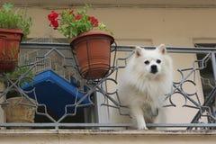 Cute white dog Stock Photos