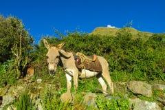 Cute white donkey with saddle Stock Photos