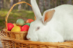 Cute white Ester rabbit Royalty Free Stock Image