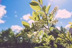 Cute white flowers Stock Photography