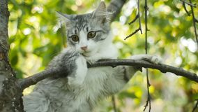 Cute white-gray cat sitting on a tree and watching nature, funny animals, kitten is resting and observing garden, funny animals ha