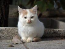 Cute kitten. Portrait of cute kitten sat on pavement or sidewalk Royalty Free Stock Image