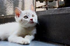 The cute white kitten stock image