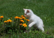 Cute white kitten and flowers Stock Photo