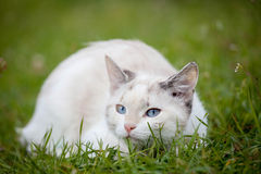 Cute white kitten Royalty Free Stock Images
