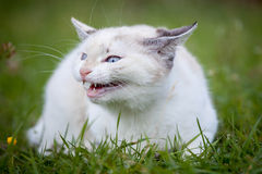 Cute white kitten Royalty Free Stock Image