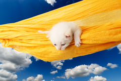 Cute white kitten in hammock at blue sky Stock Photo