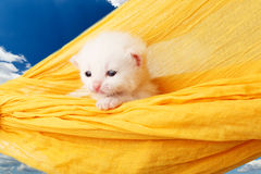 Cute white kitten in hammock at blue sky Royalty Free Stock Images