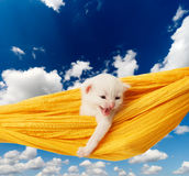 Cute white kitten in hammock at blue sky Royalty Free Stock Photo