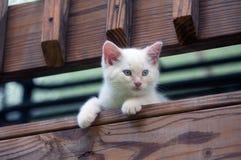 Cute white kitten peeking over rail Royalty Free Stock Photo