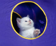 Cute white kitten in play house Royalty Free Stock Photography