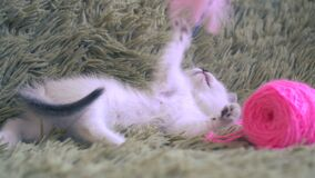 Cute white kitten playing with pink ball of wool.  stock video footage