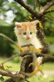 Cute white kitten sitting on the tree branches Stock Image