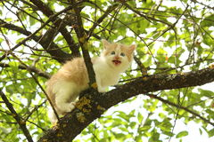 Cute white kitten sitting on the tree branches Stock Images