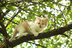 Cute white kitten sitting on the tree branches Royalty Free Stock Photography