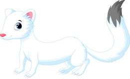 Cute white Least Weasel Stock Image