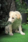 Cute white puppy Stock Photo