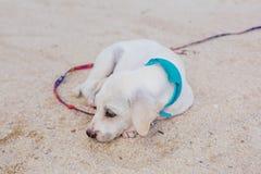 Cute white puppy on the beach Stock Photos