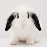 Cute White Rabbit Stock Photography